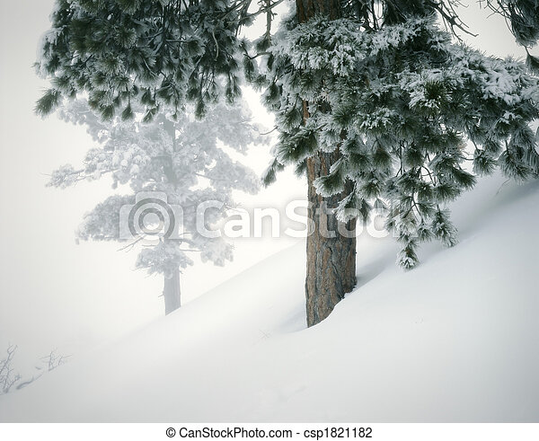 Winter Mountain Landscape with Fresh Snow and Pines. Great scene for winter and skiing topics. Great for nature, wilderness, adventure, exploration, travel, backcountry, weather and outdoor recreation themes. 16bit / 100mg scans from 4x5 transparency.