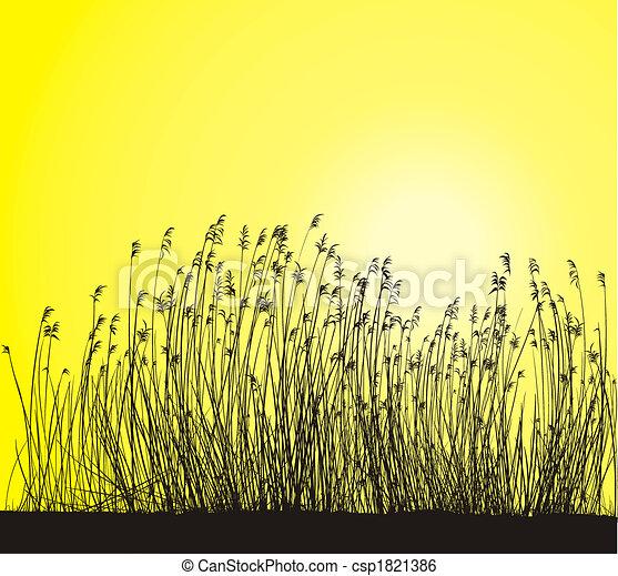 Reed - csp1821386