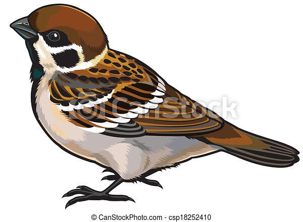 clip art vecteur de moineau arbre  moineau  sauvage sparrow clipart black and white sparrow clip art images