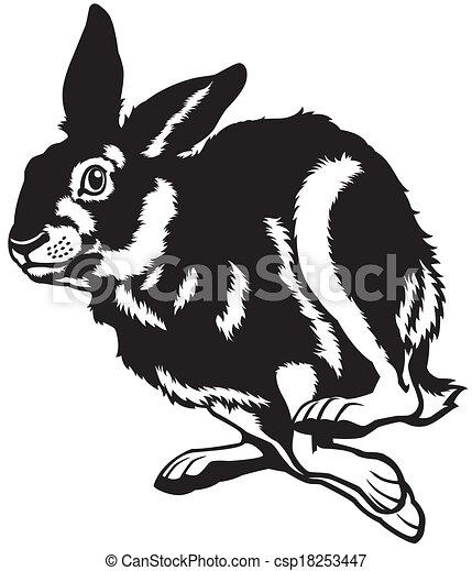 running european hare  - csp18253447