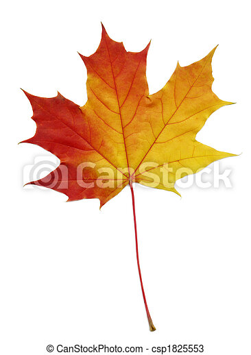 maple leaf - csp1825553
