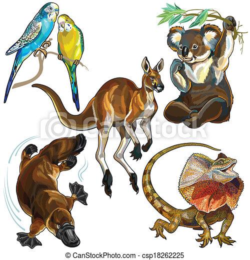 Australian Wildlife Drawings Set With Australian Animals
