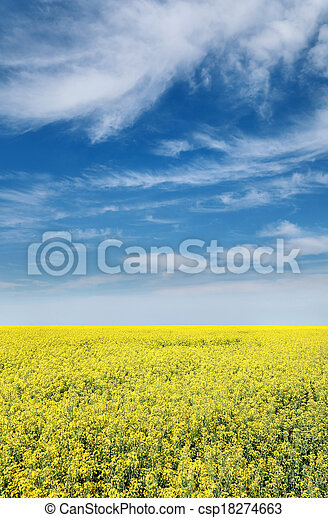 Agriculture, rapeseed - csp18274663