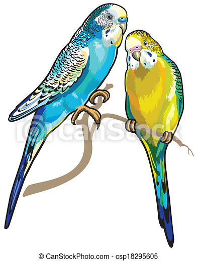 Clipart vecteur de perruches australien parakeets isol - Dessin perruche ...