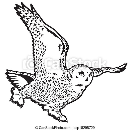 Snowy White Owl Drawing Vector Snowy Owl Black White