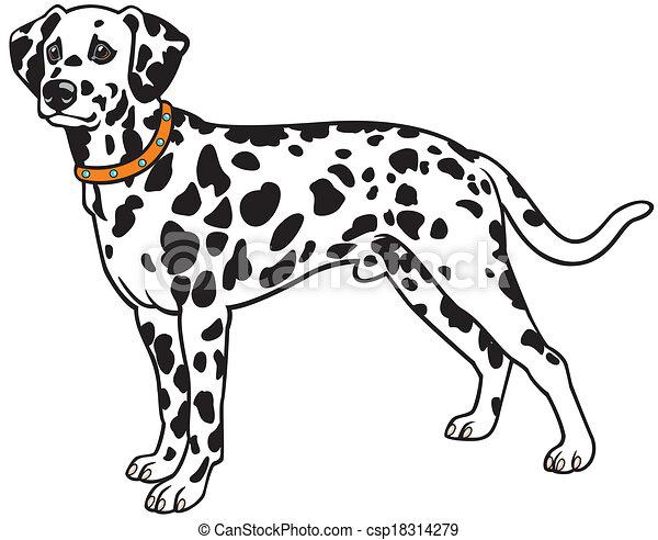 Illustrations vectoris es de dalmatien chien dalmatien race c t vue image isol - Coloriage dalmatien ...