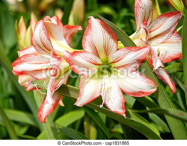 Flowers - Beautiful flowers in the garden