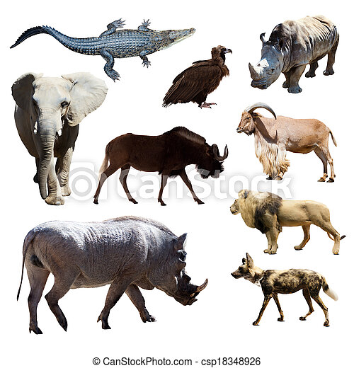 Warthog and other African animals  - csp18348926
