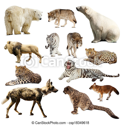 Set of predatory mammals over white - csp18349618