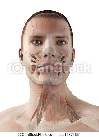 medical 3d illustration - male muscle system - facial muscles ...