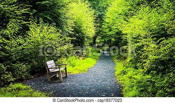 Bench on the Limberlost Trail, in Shenandoah National Park, Virginia. - csp18377023