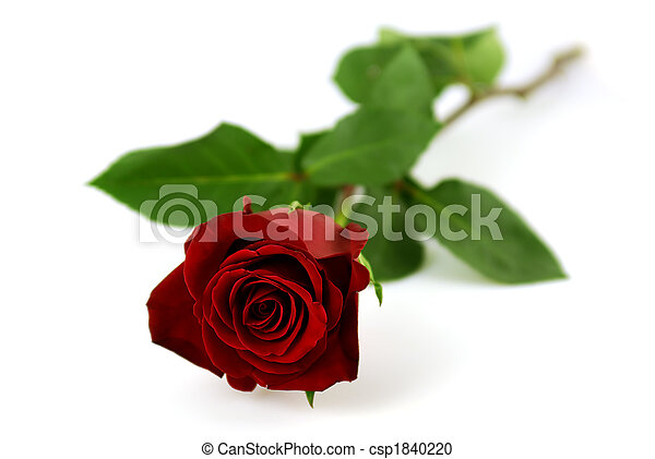 Single red rose on a white background - csp1840220