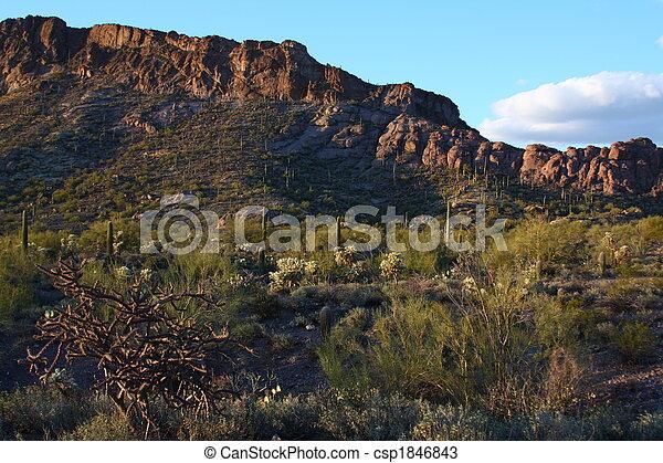 Sonoran desert - csp1846843