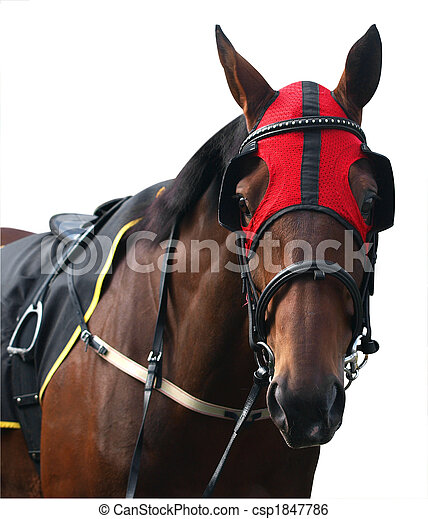 Racehorse with Red Hood - csp1847786