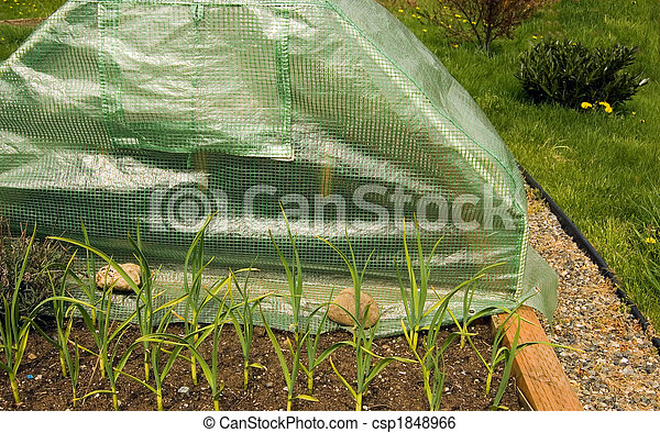 Mini Greenhouse of Gardenergardening, garden, equipment, mini, greenhouse, hothouse, warming bed, garlic, plants, grass, path, environment, ecology, gardener, device, object, instrument, aide, gardening, garden, equipment, mini, greenhouse, hothouse, warming bed, garlic, plants, grass, path, environment, ecology, gardener, device, object, instrument, aide - csp1848966