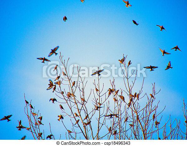 körvonal, repülés, fekete, madarak - csp18496343