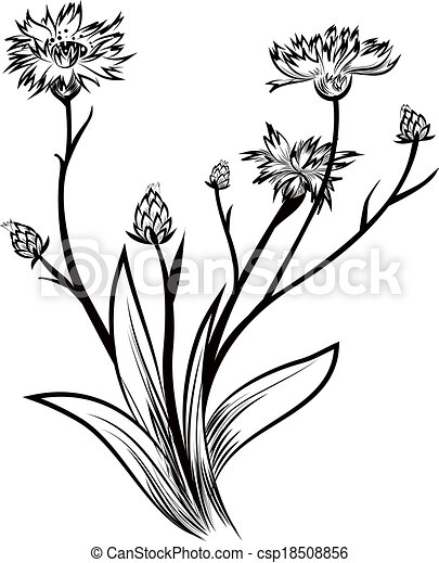 Korenbloem 18508856 moreover Drawn 20leaves 20vine further Thiruvalluvar together with Container 20clipart 20cargo 20boat further Sick 20clipart 20germ. on pencil line vector