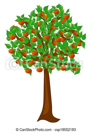 Free Clipart Apricot Fruit