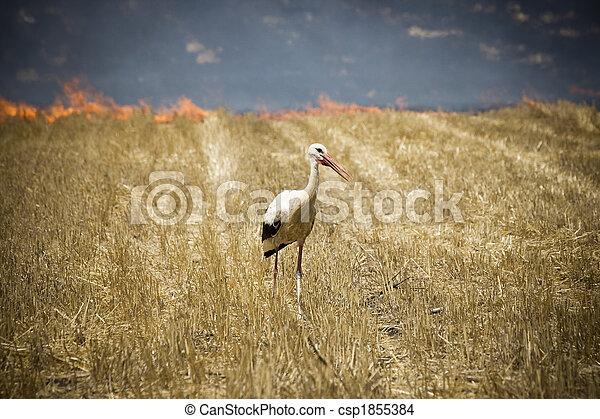 White Stork - csp1855384