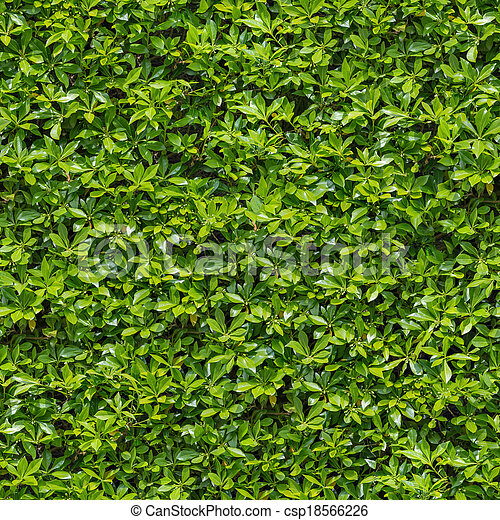 Stock Photo Of Green Bush Seamless Tileable Texture