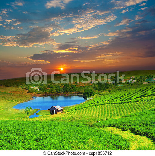 Tea plantation - csp1856712