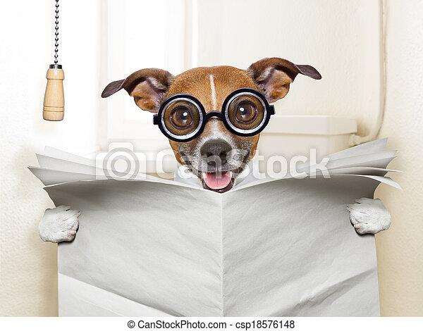 洗手間, 狗 - csp18576148