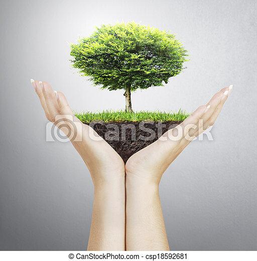 árvore pequena, mão - csp18592681