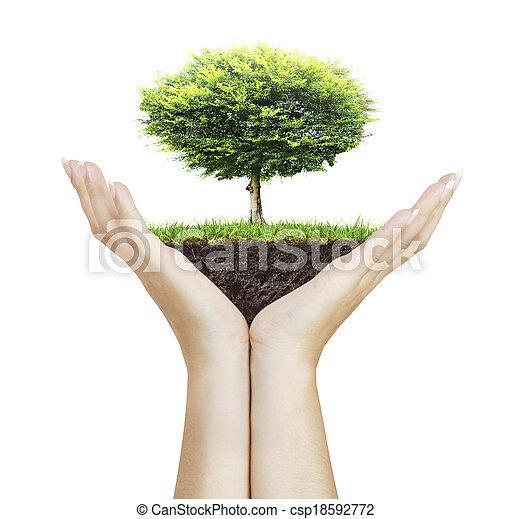árvore pequena, mão - csp18592772
