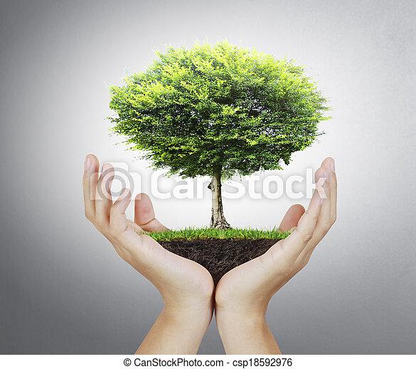 pequeno, árvore, mão - csp18592976