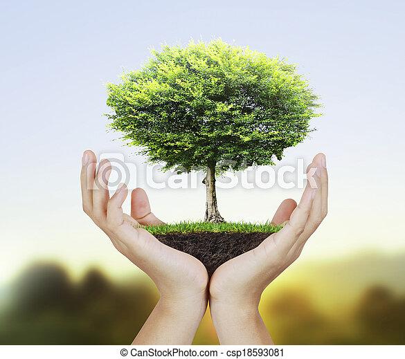 pequeno, árvore, mão - csp18593081
