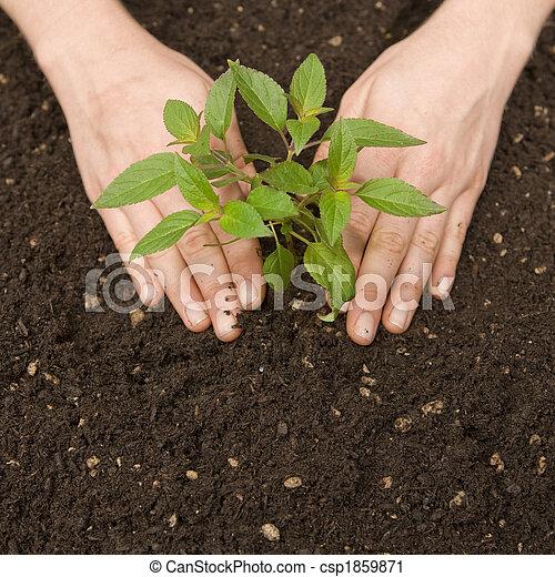 Fertile Soil  - csp1859871