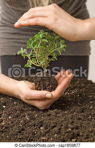ambiente, Proteger - csp1859877