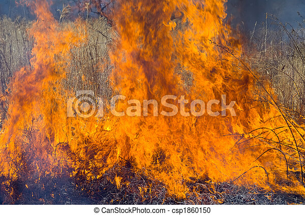Flame of Brushfire 6