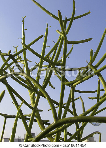 stock bilder von wasser bleistift pflanze kaktus. Black Bedroom Furniture Sets. Home Design Ideas
