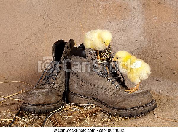 Boot climbing easter chicks - csp18614082