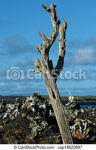 Toter Baum auf Galapagos - csp18622897