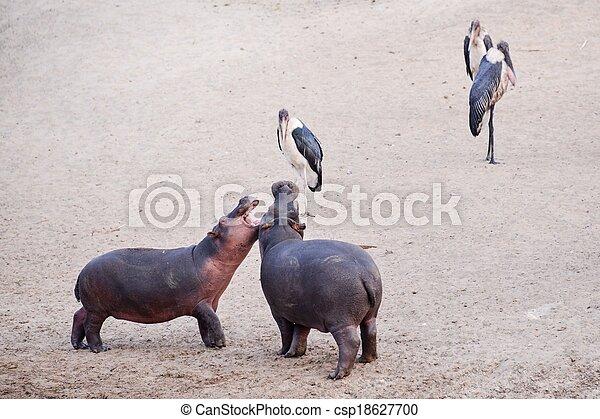 hippo - csp18627700