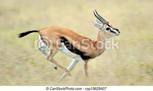 impala in Tanzania national park - csp18628407