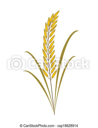 Vector Clip Art of Golden Rice or Jasmine Rice on White Background ...