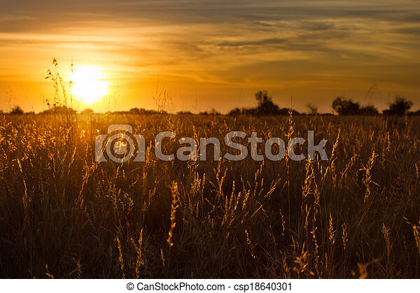 Golden sunset through dry kalahari grass with lovely orange and yellow colours - csp18640301