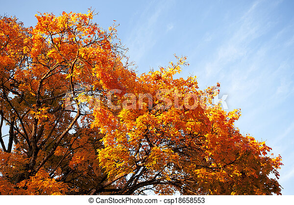 Coloured tree in the park - csp18658553