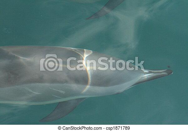 Dolphin under water. - csp1871789