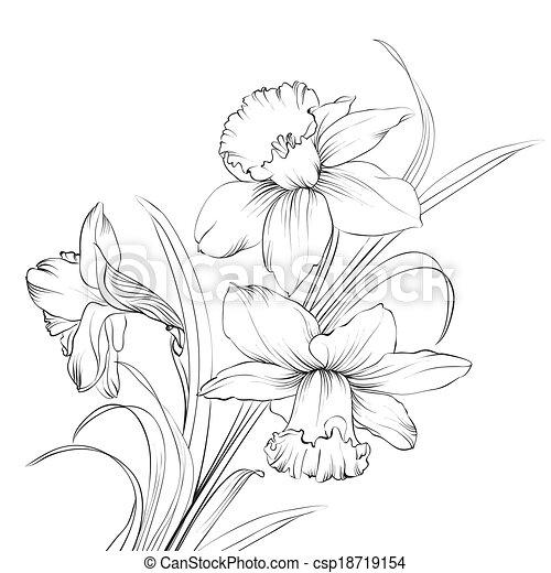 Illustrations de fleur jonquille isol blanc narcisse - Dessin jonquille fleur ...