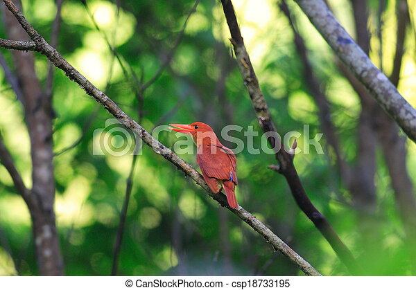 Ruddy Kingfisher - csp18733195