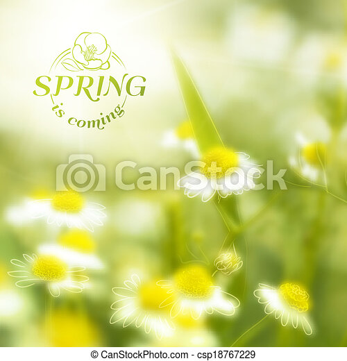 Fresh chamomile, spring background. - csp18767229