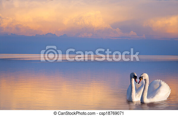 art  beautiful Two white swans on a lake  - csp18769071