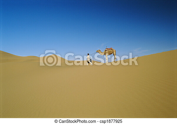 Man in desert with stubborn camel - csp1877925