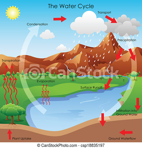 Vectors of Water Cycle - vector illustration of diagram showing water ...