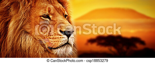 Porträt, löwe, savanne,  safari - csp18853279