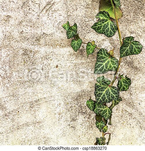 pared, hojas, viejo, hiedra, plano de fondo - csp18863270